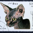 Postage stamp with the image of a cat Sphynx breed — Stock Photo