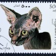 Postage stamp with the image of a cat Sphynx breed - Stock Photo