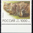 Postage stamp with the image of the cat siberian breed — Stock Photo
