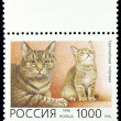 Postage stamp with the image of the cat european tiger breed — Stock Photo