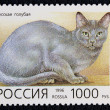 Postage stamp with image of cat russiblue breed — Stock Photo #19403687