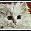Stock Photo: Postage stamp with image of kitten