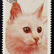 Postage stamp with image cat — Stock Photo #19403819