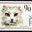 Postage stamp with the image of a cat — Стоковая фотография
