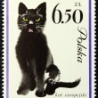 Postage stamp with the image of a cat — Photo