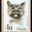 Postage stamp with the image of a cat — Stockfoto
