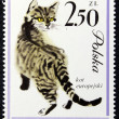 Postage stamp with the image of a cat — Lizenzfreies Foto