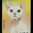 Royalty-Free Stock Photo: Postage stamp with the image of  the cat devon rex white breed.