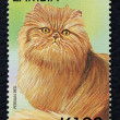 Stock Photo: Postage stamp with image of cat persired breed.