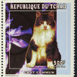 Postage stamp with the image of the cat — Foto de Stock