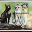 Postage stamp with the image of the cat — ストック写真