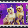 Stok fotoğraf: PPostage stamp with image of cat siamese breed