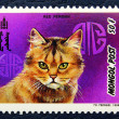 Postage stamp with the image of  the cat red persian breed. — Zdjęcie stockowe