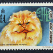 Postage stamp with the image of  the cat persian breed. — Zdjęcie stockowe