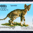 Stok fotoğraf: Postage stamp with image of cat Rex breed