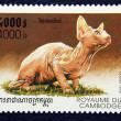 Postage stamp with the image of the cat — Stock Photo #19404185