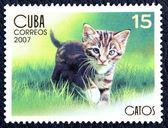 子猫のイメージで郵便切手 — ストック写真