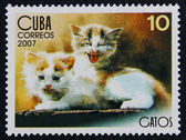 Postage stamp with the image of the kittens — Stock Photo