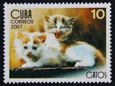 Frimärke med avbilda av kattungarna — Stockfoto