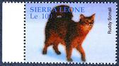 Frimärke med bilden av en katt — Stockfoto