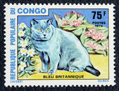 Postage stamp with the image the cat (British blue) — Stock Photo