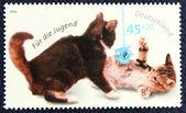 почтовая марка с изображением игра котят — Стоковое фото