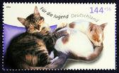 Frimärke med avbilda av katten — Stockfoto