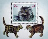 Postzegel met de afbeelding van een kat — Stockfoto