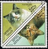 Poštovní známka s obrázkem kočky — Stock fotografie