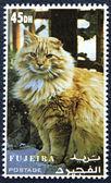 Bir kedinin görüntüsüyle posta pulu — Stok fotoğraf