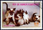 Selo com a imagem de um gato — Foto Stock