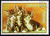 一只猫的形象的邮票 — 图库照片