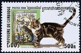 Briefmarke mit dem bild einer katze — Stockfoto