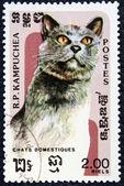 Znaczek pocztowy z wizerunkiem kotka — Zdjęcie stockowe