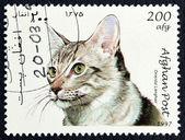 почтовая марка с изображением кота — Стоковое фото