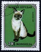 Estampilla con la imagen de un gato siamés — Foto de Stock