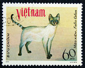 Postage stamp with the image the cat — Stock Photo