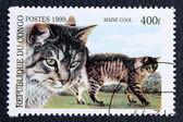 邮票与猫的图像 — 图库照片