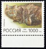 シベリアの猫の品種のイメージで郵便切手 — ストック写真