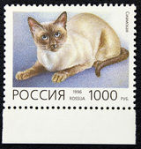 Postage stamp with the image of the cat siamese breed — Stock Photo