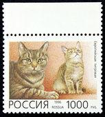 Briefmarke mit dem bild der europäischen tiger katzenrasse — Stockfoto