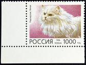 Estampilla con la imagen de la raza blanca del gato persa — Foto de Stock