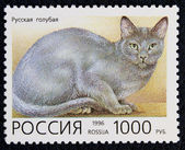 Postage stamp with the image of the cat russian blue breed — Stock Photo
