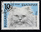 Postage stamp with the image of a cat — Stock Photo