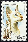 Timbre-poste avec l'image d'un chat — Photo