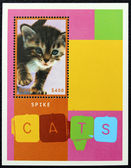 Postage stamp with the image of a kitten — Stock Photo
