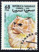 Znaczek pocztowy z wizerunkiem kotów — Zdjęcie stockowe