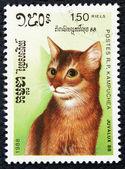 Briefmarke mit dem bild der katze — Stockfoto