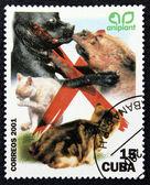 Briefmarke mit dem Bild einer Kampfhunden — Stockfoto