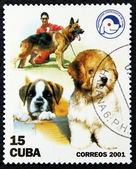 Postage stamp with the image of a dogs — Stock Photo